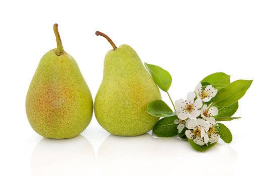 gracefruit_gracefruit_freesiapearfragranceoil_1460546428dreamstimesmall_21008881