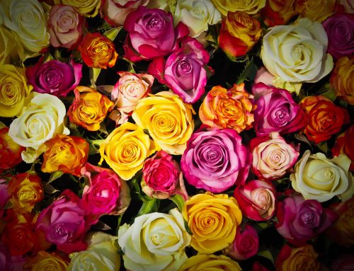 It's All About Roses!